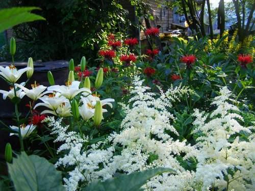 Какие многолетние цветы цветут в июне